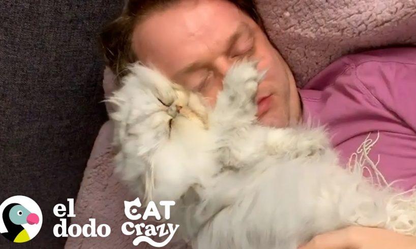 El gato más esponjoso no puede alejarse de su papá I Cat Crazy   El Dodo