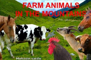 FOR KIDS: farm animals in the mountains with natural sounds - NO MUSIC! video for children