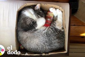 Gato no es nada sin su mejor amigo, una botella de canela | El Dodo