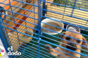 Hombre rescata a cachorro de una jaula de pájaros | El Dodo