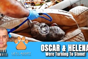 Hope Rescues 2 Dogs Turning To Stone Too Sick To Move - @Viktor Larkhill Extreme Rescue