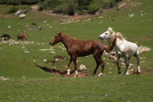 Horse 🐎 Kick 😄!!! Animal Fight Club