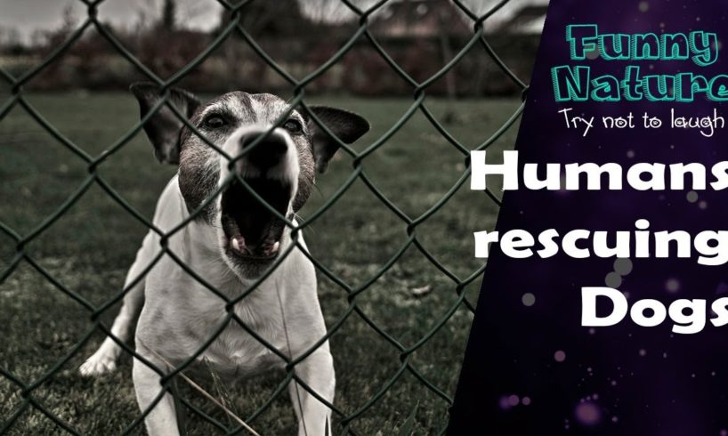 Human Rescue Dog - Best Dog Rescues - FunnyNature
