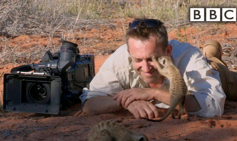 Magic meerkat moments - BBC