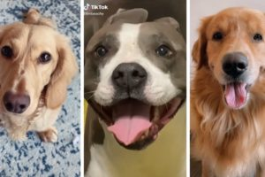 Most Funny Dogs & Cutest Puppies of TikTok Compilation  ~ The Dog Squad