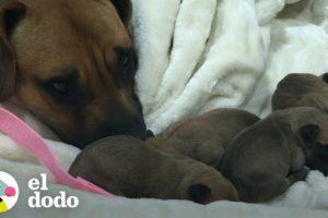 Pareja adopta a esta perra mamá y sus nueve cachorros que tenía debajo de una camioneta | El Dodo