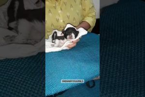 Pets rescue videos 🐕 #shorts #animals #rescue #adoptme #pets (4)