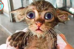 Rescue Kitten Thin and Desperate For Food From Light Pole | Heartbreaking Animal Rescues