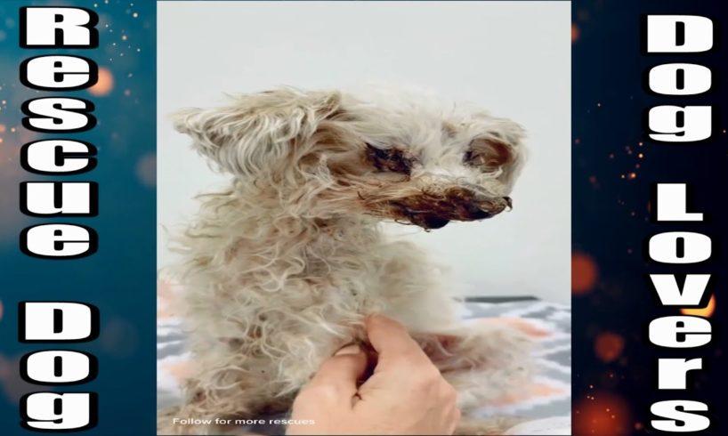 Rescue dog videos -  animal rescue - the dodo dogs