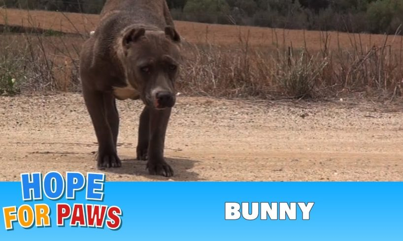 Rescuing a scared stranded Pit Bull who was struggling to survive.  Please share.