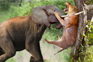 The Horrifying Scene When The Angry Giant Elephant Attacked Even Lion Had To Cry