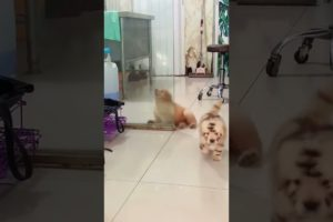 The cutest puppy collide in glass????   #Shorts