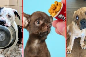 The most Amazing Dog Rescue Stories! 🐶