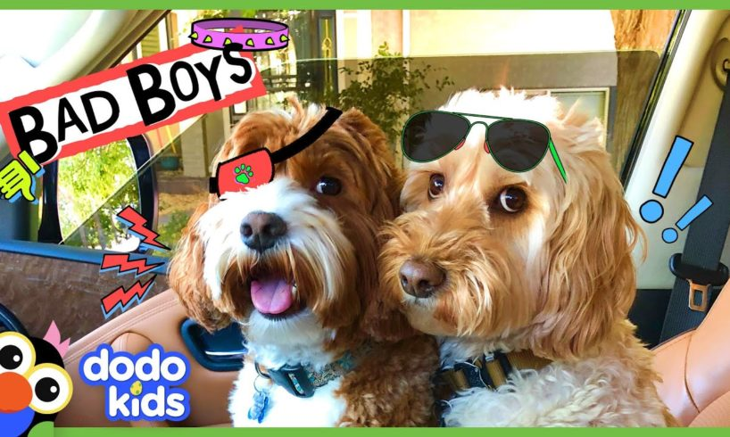 These Two Dogs Are Partners In Crime…Or Are They?   Animal Videos For Kids   Dodo Kids
