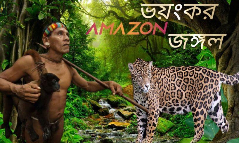 amazon forest animal videos,forest animal rescue videos,wild animals videos