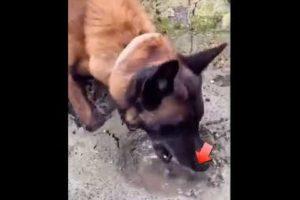 dog rescues fish 🐶❤🐟 #shorts