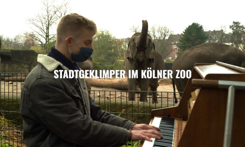 """Animals and the power of music"" - Stadtgeklimper im Kölner Zoo"