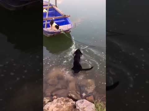 the dog rescues his friend from the boat (a true friend)