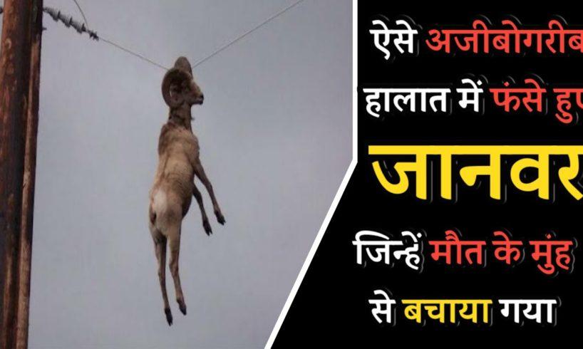 इंसान के रूप में भगवान    Amazing animal rescues caught on camera
