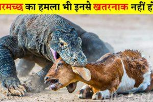 जब खूंखार जानवर अपने शिकार को जिंदा निगल गए | When Animals Hunting & Eating Prey Alive
