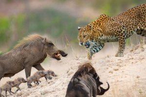 10 Greatest Animal Fights Caught On Camera