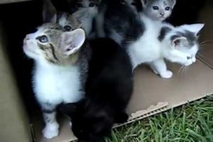 10 Kittens 1st Day Outside - Cute Cats Playing - Adorable Animals
