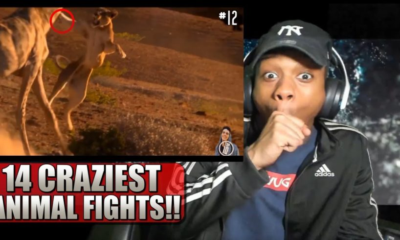 14 CRAZIEST Animal Fights Caught On Camera - Reaction!