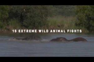 15 Extreme wild Animal fights