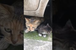Daily Compilation  For Rescue Homeless Dogs and Cats, By Animals Hobbi 444