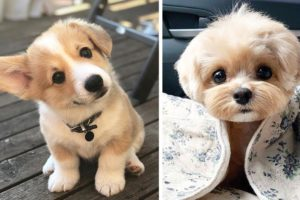 ❤So Cutest Puppies 🦮 Best Funny and Lovely Dog and Cat Videos 2021 🐈