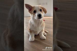 Cutest puppies🐶 #puppyvideos #cutepuppy #puppystuff #sweetpuppy #short