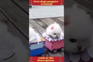 cute dogs | cutest puppies | Labrador