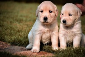 Cute baby animals Videos Compilation cutest moment of the animals - Cutest Puppies  eating Puppy #7