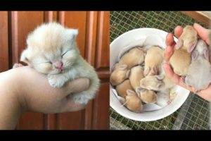 AWW SO CUTE! Cutest baby animals Videos Compilation Cute moment of the Animals - Cutest Animals #14