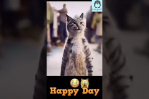 Funniest Animals - Best Of The 2021 Funny Animal Videos | Penguin | Try Not To Laugh Compilation