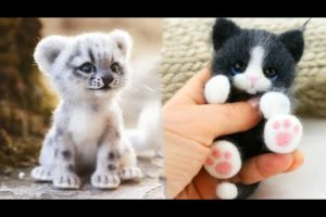 AWW SO CUTE! Cutest baby animals Videos Compilation Cute moment of the Animals - Cutest Animals #12