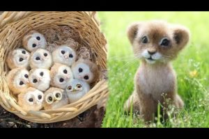 AWW SO CUTE! Cutest baby animals Videos Compilation Cute moment of the Animals - Cutest Animals #16