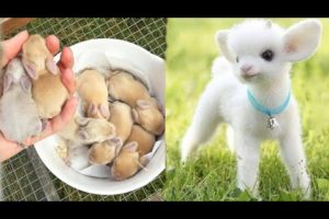 AWW SO CUTE! Cutest baby animals Videos Compilation Cute moment of the Animals - Cutest Animals #1