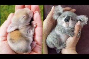 Cutest baby animals Videos Compilation Cute moment of the Animals - Cutest Animals #12