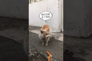 Daily Compilation  For Rescue Homeless Dogs and Cats, By Animals Hobbi 899