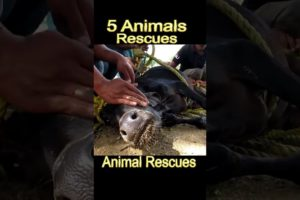 5 animal rescues that will restore your faith in humanity | #shorts #youtubeshorts