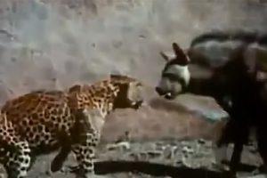 50 Сумасшедших Битв Животных СНЯТЫХ на КАМЕРУ #4