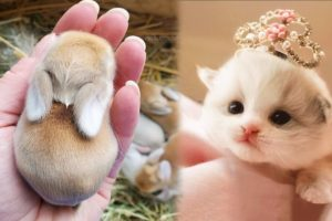AWW Animals SOO Cute! OMG Cute baby animals Videos Compilation Cutest moment of the animals #3