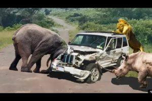 Amazing Wild Animals Attacks - Wild Animal Fights Caught On Camera | Wild Animals Ultimate Fights