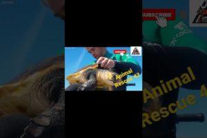Animal Rescue 43