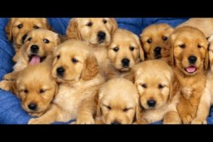 Animal cruelty | Top 10 Animal Rescues that Will melt Your heart