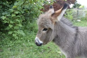 Animal rescues   Amazing Rescue of baby Donkey terrified with pain