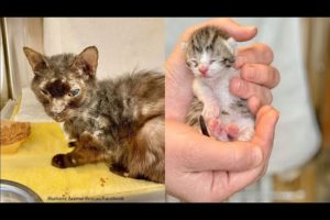 Animal rescues  Rescue of baby kittens trapped in exhaust duct rescued