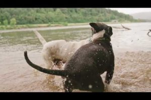 Animals Are SO Cute! Cute Dogs Playing Videos Compilation cute moment of the animals