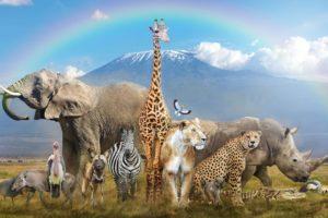 Animals world nature/تقديم قناة جديدة تهتم بعالم الحيوانات والغابات فضاء للحيوانات والغابات والطبيعة